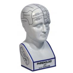 Tête Phrénologique Authentic Models